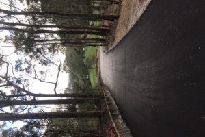 Driveway 8